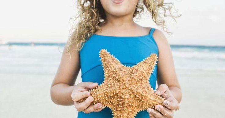 Quais são as formas que estrelas-do-mar se adaptam ao seu ambiente?. Estrelas-do-mar são animais marinhos comumente observados em piscinas naturais rochosas, e são trazidas para as costas pelos oceanos. Elas vivem em zonas tropicais de entre marés e no fundo dos mares de temperaturas mais baixas. São classificadas como equinodermos invertebrados, juntamente com seus parentes mais próximos, os ouriços do mar, os ...
