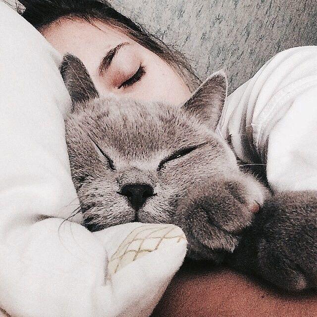 потому, было картинки кошек на аву спят помогает