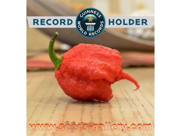 CAROLINA REAPER Seeds Worlds Hottest Chili Pepper