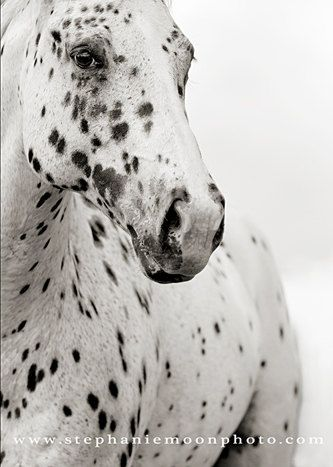 Fine Art Black and White Horse Photography, 11x14 Fine Art Horse Photograph. $32.00, via Etsy.