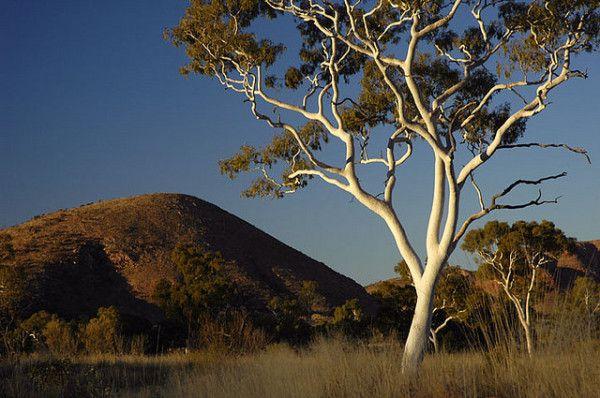 Interesting Facts About Australia: Great Victoria Desert