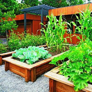 Beautiful Vegetable Gardens | ... redwood beds for the vegetable gardens. Very beautiful raised beds