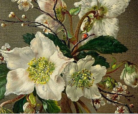 Cecil Kennedy  Christmas Roses, detail  20th century