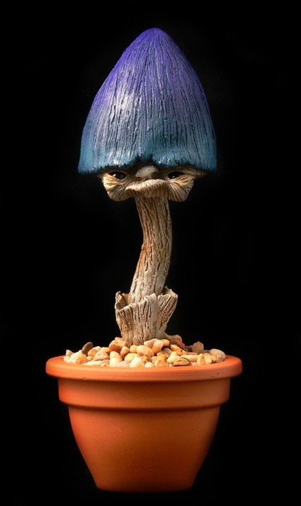 new species of mushroom