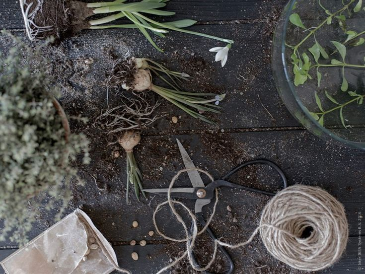 893 besten ikea plants bilder auf pinterest topfpflanzen pflanzent pfe und zimmerpflanzen. Black Bedroom Furniture Sets. Home Design Ideas