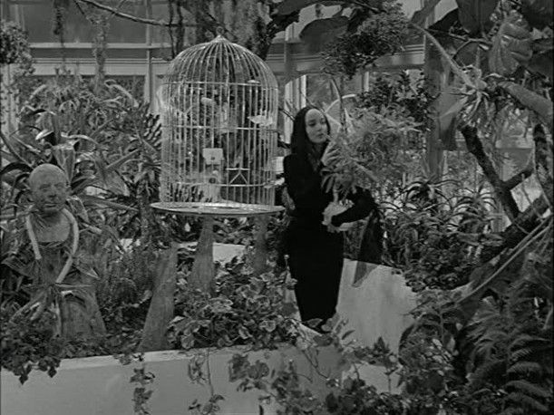 You can learn a  lot about decorating for Halloween  from the Addams family-conservatory...a lot of pictures !