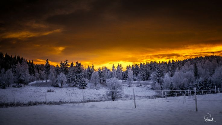 Golden Winter Morning by Kasper M. de Thurah on 500px #beautiful #cold #forrest #gold #landscape #morning #norway #quiet #sky #snow #sun #sunrise #wallpaper #winter