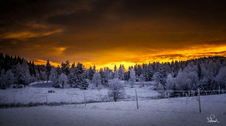Golden Winter Morning by Kasper M. de Thurah on 500px #beautiful #cold #forrest #gold #landscape #morning #norway #quiet #sky #snow #sun #sunrise #wallpaper #winter