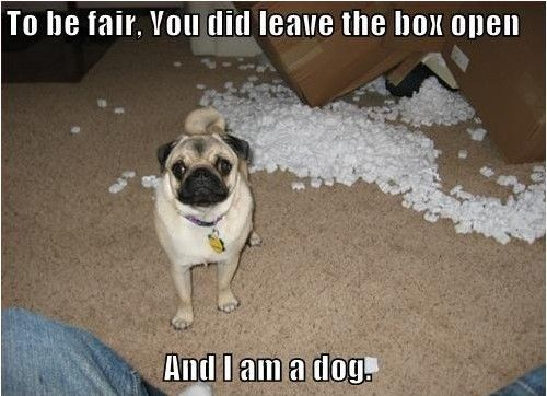 Funny Dogs, Funny Pictures, Funny Pugs, Dogs Humor, Funnydogs, Dogs Pictures, Dogs Funny, True Stories, Animal