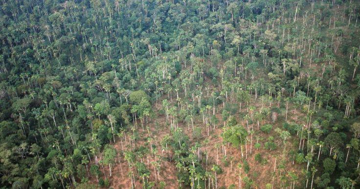 Como reduzir o impacto dos desmatamentos florestais?. Os grandes ecossistemas, como a Floresta Amazônica, o Pantanal Mato-Grossense e a Floresta Equatorial do Sudeste Asiático, vêm sendo devastados pela implacável ação humana. Cada vez mais, áreas gigantescas vêm sendo destruídas para a construção de novas cidades ou para áreas de pasto e cultivo. O resultado é que o prejuízo ao meio ambiente cresce ...