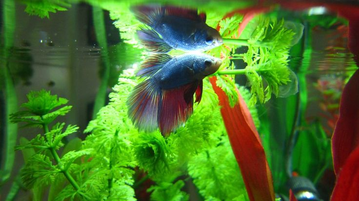 54 Best Images About Betta Aquariums On Pinterest Betta