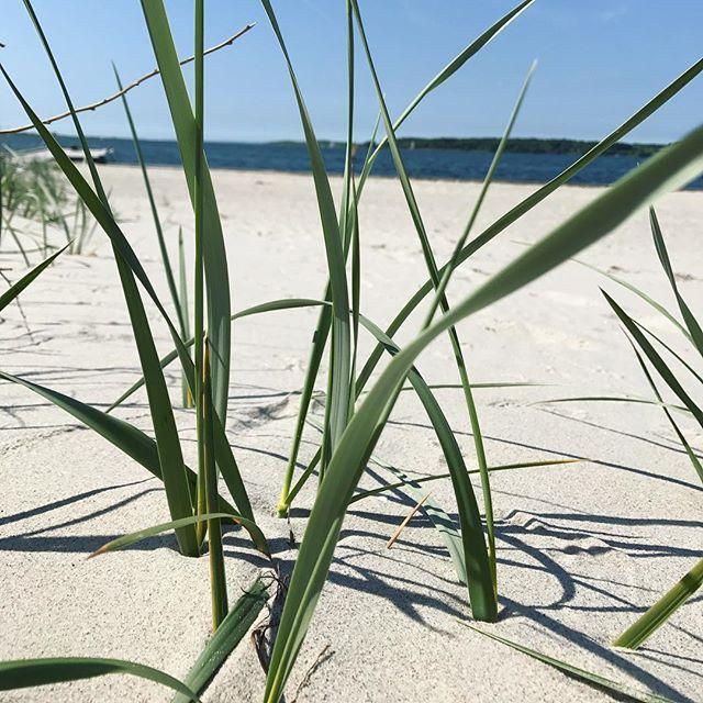 Day 2 ☀️ Summer in #denmark 🏖 At the Beach today 💋_______________________________________  #love2live #lifestyle #denmark #scandinavianstyle #chic  #mitodense #odensebloggers #aarhus #københavn  #odense #beautiful  #fashion #fashionlook #nailfashion #shootwithlove #lifestylephotography #livsstilsblog #details #fashionstyle  #fashionist #fashionaddict #domoreofwhatmakesyouhappy  #travel #explorer #blondehair #greeneyes #bloglovin  #beachlover #faaborg