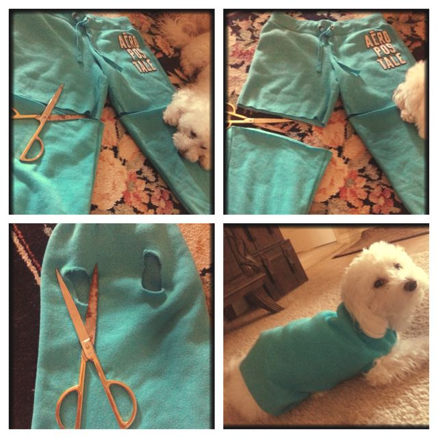 DIY dog sweater- super easy!