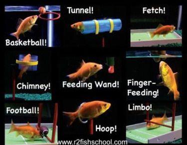 R2 Fish School -paketti - MFKA Verkkokauppa