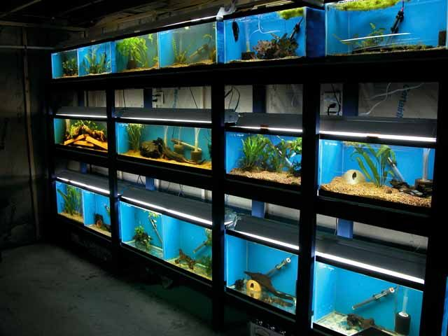 Multi tank stand neater than most aquarium stores for Pet stores that sell fish