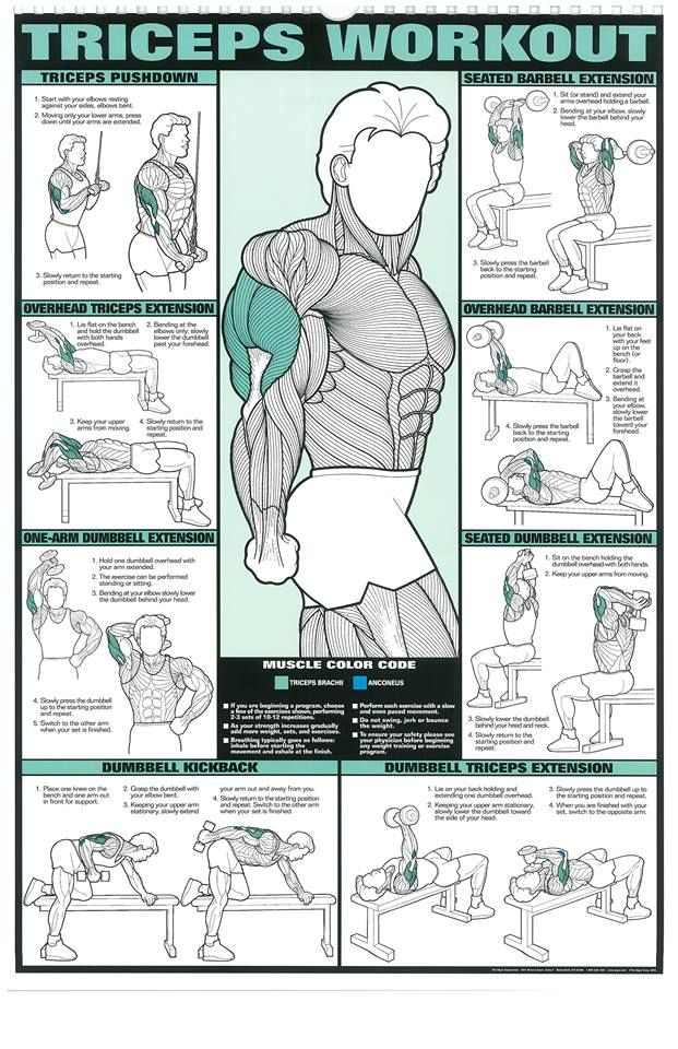 gym exercise chart hd: 21 best workout chart images on pinterest physical exercise