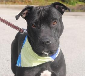 Maui up for adoption at Camden County Shelter <3