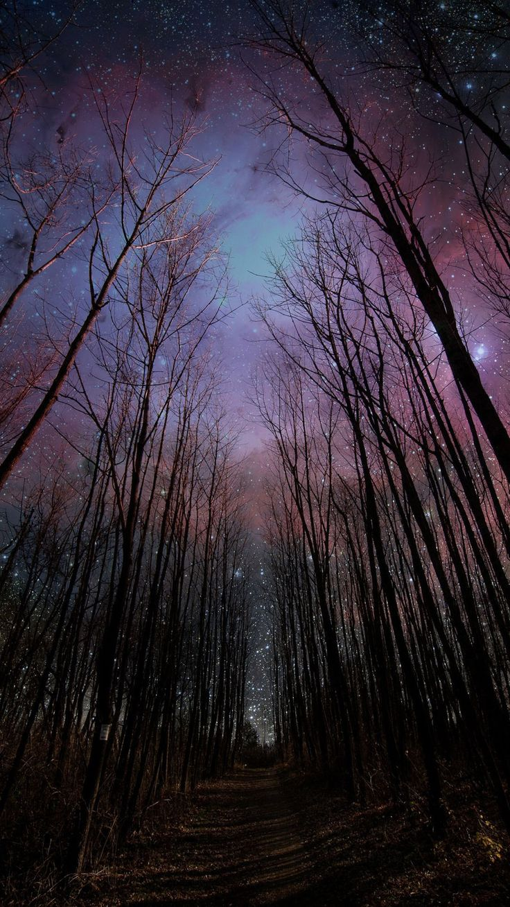 Wither Trees Towards Shiny Starry Sky #iPhone #6 #plus #wallpaper