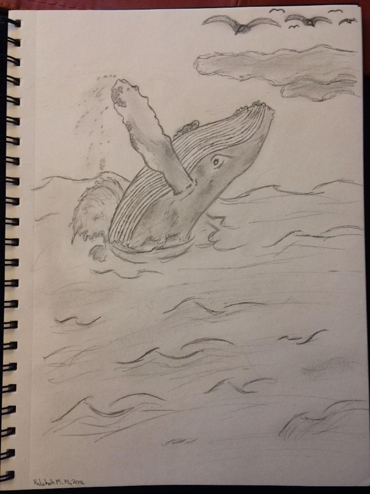 I drew this humpback whale for my friend Sara b.