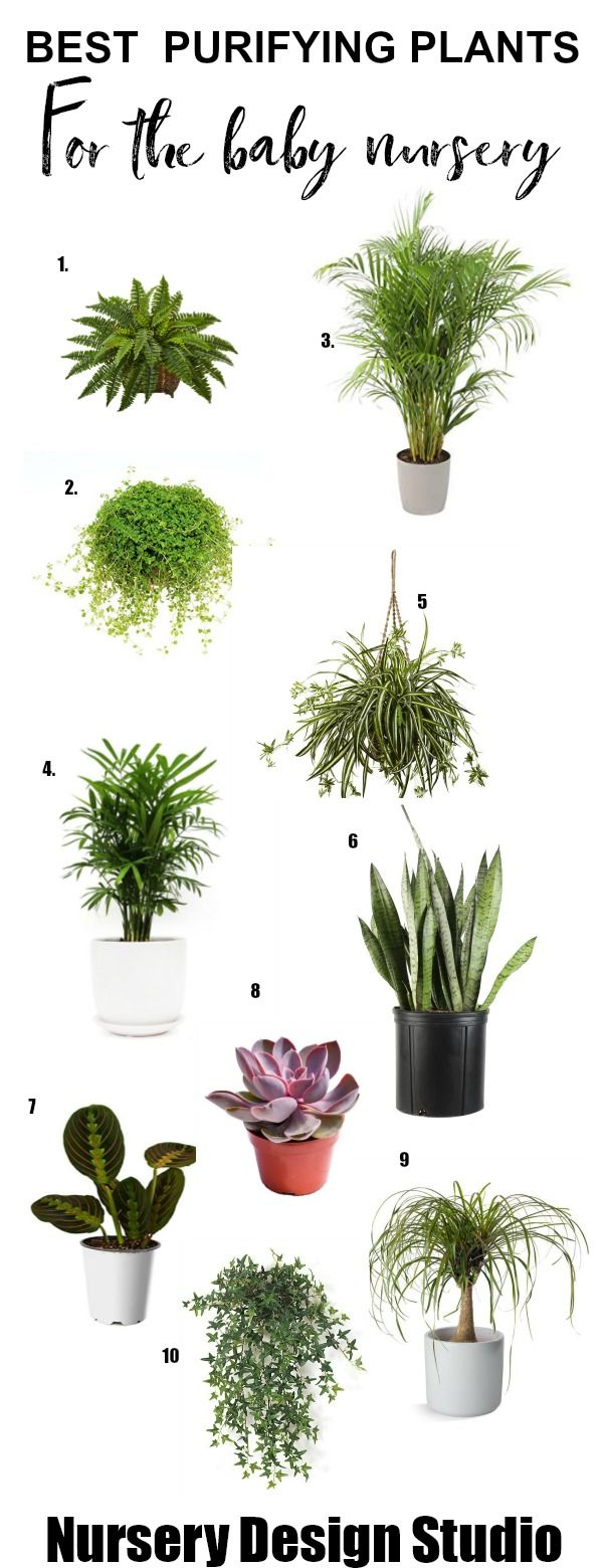 HOUSE PLANTS FOR BABY NURSERY: BEST AIR PURIFYING PLANTS