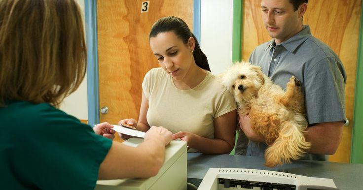 Cirurgia estomacal em cães. Se seu cão está doente ou ingeriu um objeto estranho, pode ser necessário submetê-lo à uma cirurgia estomacal. Em alguns casos, o veterinário saberá exatamente qual o problema, enquanto que, em outros, a cirurgia será exploratória.