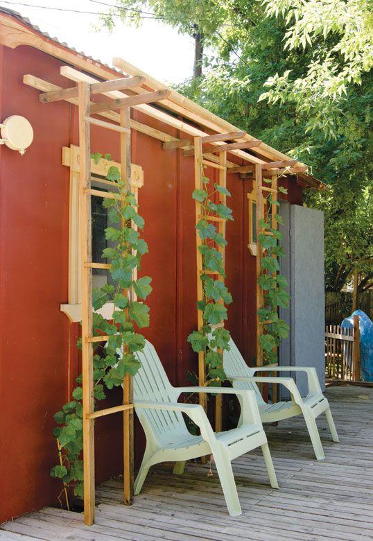 14 best images about grapevine trellis ideas on Pinterest