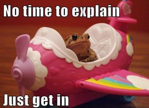 frog / toad in a pink plane. No time to explain