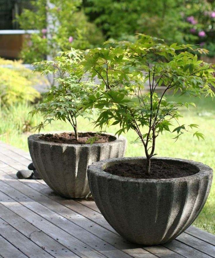 deux grandes jardinières ovales en béton avec érable du Japon sur la terrasse