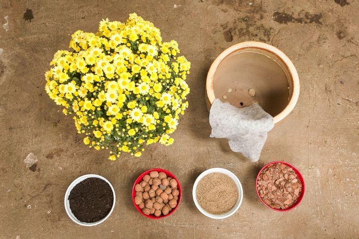 Materiais: muda de margarida  / vaso de argila com cerca do dobro do tamanho da muda / manta bidim / substrato (terra adubada) / argila expandida / areia fina / casca de árvore