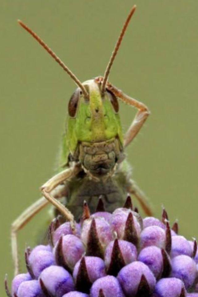23 best Inch Worm images on Pinterest | Bugs, Insects and Software bug