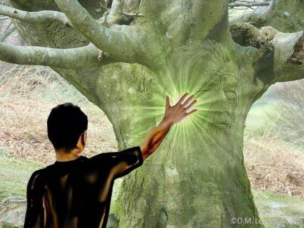 Les Secrets de l'énergie des arbres