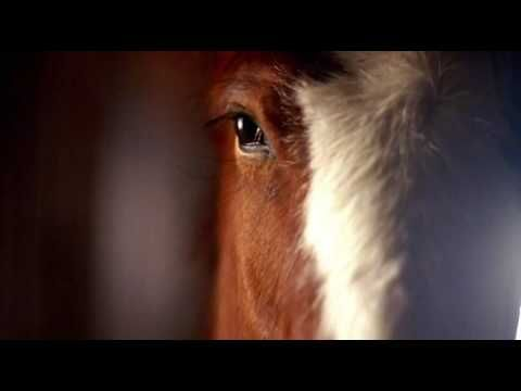My all-time favorite commercial. Almost brings tears to my eyes :) '06 Budweiser Clydesdale Super Bowl commercial.