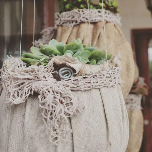 little lacey — garden succulents