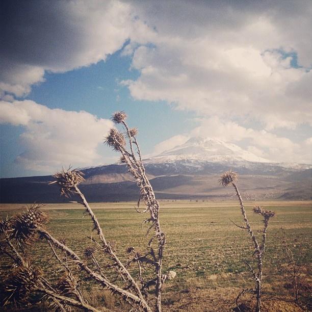 That is homemade/homeland Aksaray / Turkey // #latergram #Padgram