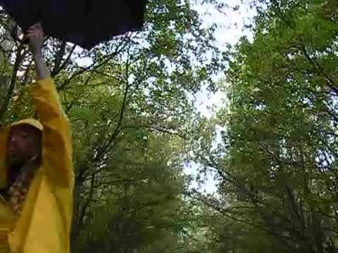 'Woele-waaie-wind'. Een winderig herfstliedje voor kleuters van Tijl Damen.Tekst en akkoorden: http://tijldamen.nl/kinderliedjes/herfst/de-woele-waaie-wind