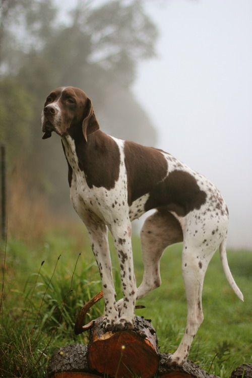 Dog Names After Guns