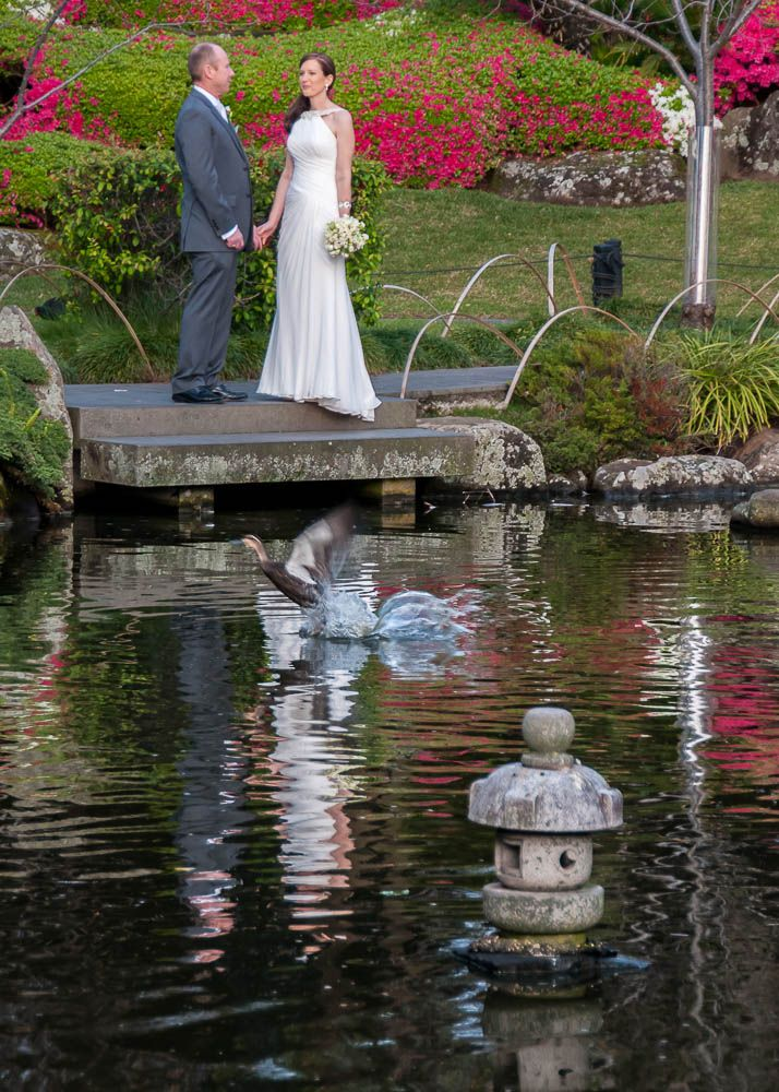 Bridal photography in the Japanese Garden at Melbourne Zoo (scheduled via http://www.tailwindapp.com?utm_source=pinterest&utm_medium=twpin&utm_content=post858023&utm_campaign=scheduler_attribution)