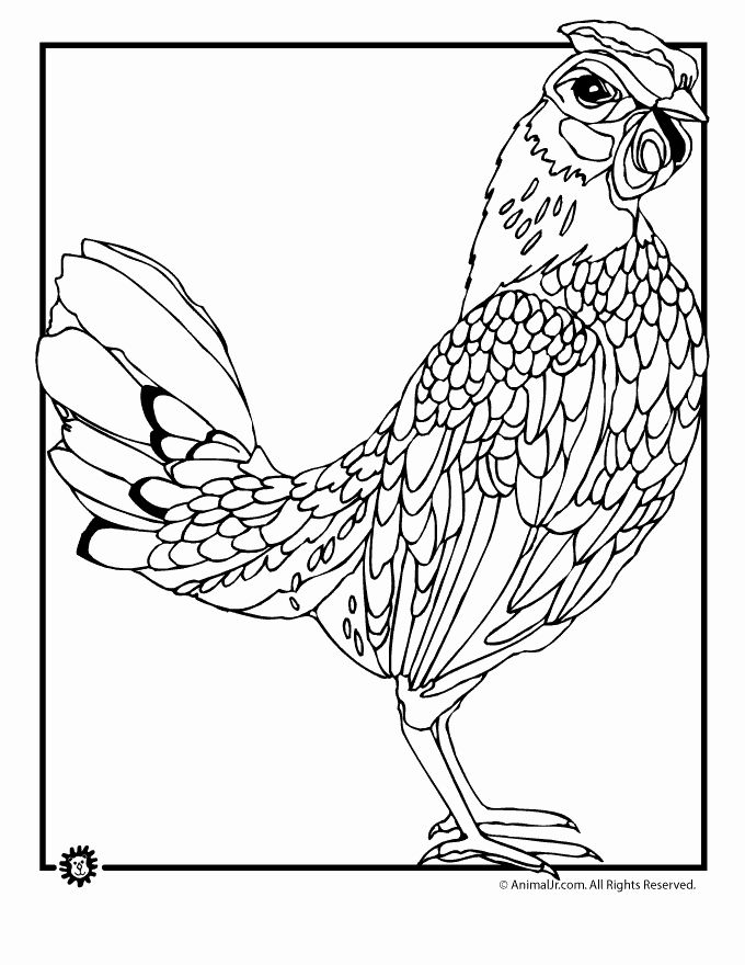 Coloring Pages Animals Realistic Best Of Realistic Coloring Pages Chicken Coloring Pages Farm Animal Coloring Pages Monster Coloring Pages