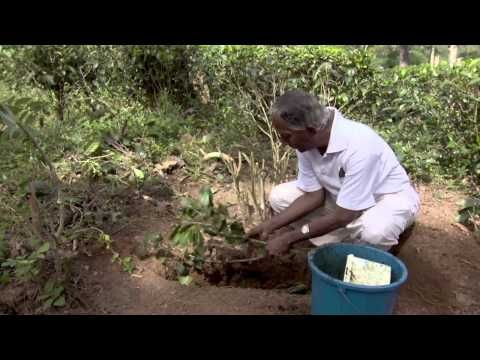 Promoting Sustainability in the Tea Plantations of Sri Lanka. 'Biochar', although a new word, is in fact an old technology; one used by Sri Lankan farmers going back hundreds of years. Now, at the Pelmadulla Tea Estate, the trial sponsored by Dilmah Conservation has being extended.