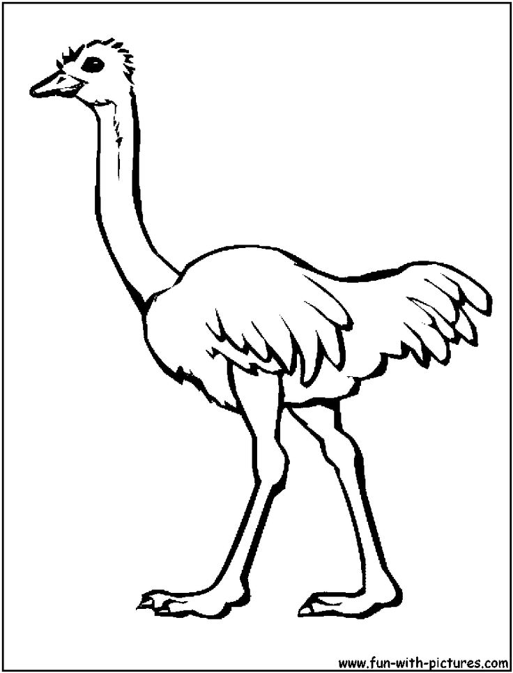 Ostrich For Animals Of Africa