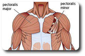Borstspieren trainen, weet jij hoe dat moet? Op deze pagina vind je tal van tips en de verschillende oefeningen om je borstspieren te trainen!