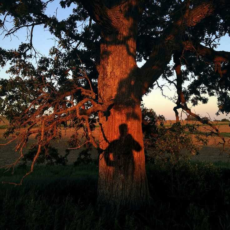 A year in the life of That Tree, a photo a day by Mark Hirsch.  Written by Patrick Traylor, ptraylor@denverpost.com