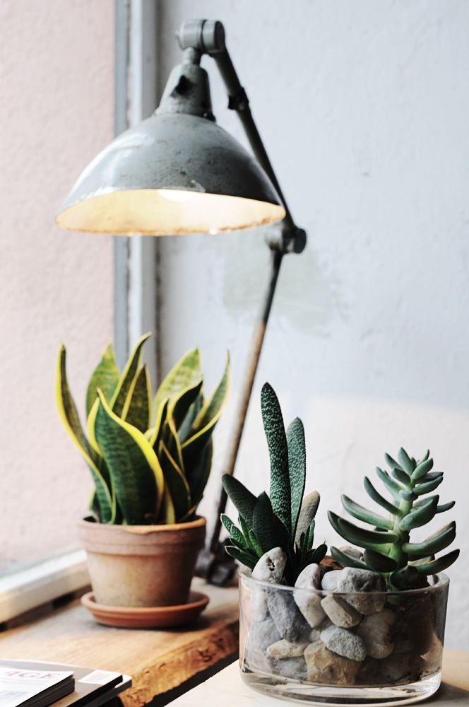 Stoere robuuste lamp gecombineerd met groene cactussen. Erg leuk voor in de vensterbank!