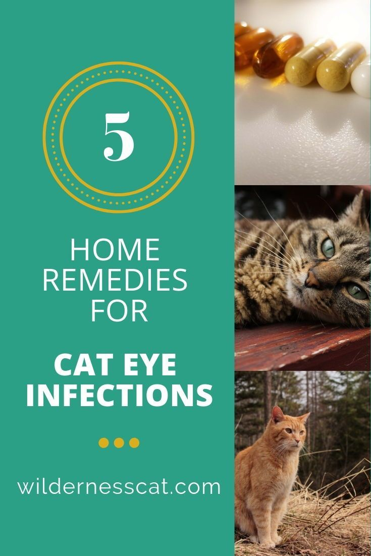 Does Your Cat Have An Eye Infection You Can Help Treat It At Home Read More For Our 5 Home Remedies For Cat Eye Inf Cat Eye Infection Eye Infections Cat Care