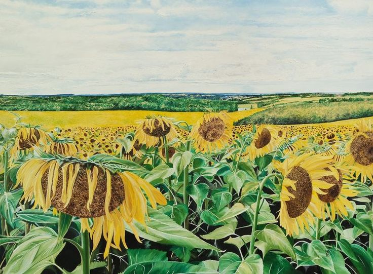 """""""Field of Sunflowers"""" by Nicola Keelan. Oil painting on Canvas, Subject: Landscapes, sea and sky, Photorealistic style, One of a kind artwork, Signed on the front, This artwork is sold unframed, Size: 101 x 76 x 2 cm (unframed), 39.76 x 29.92 x 0.79 in (unframed), Materials: Artists quality oil paint"""