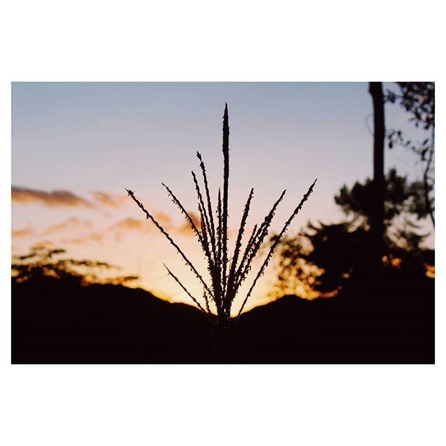 Reposting @melissavaldescastillo: El amanecer es el momento en el que nada respira, la hora del silencio. Todo está paralizado sólo la luz se mueve. #travel#travelgram#mytravelgram#travelphotography#photography#photooftheday#igtravel#instatravel#wanderlust#fernweh#reisen#passionpassport#explore#exploretocreate#wanderlust#adventure#adventuretime#hiking#hikingadventures#travelblog#travelblogger#mountains#mountain#sunrise#landscape#nature#beautifuldestinations#naturelovers