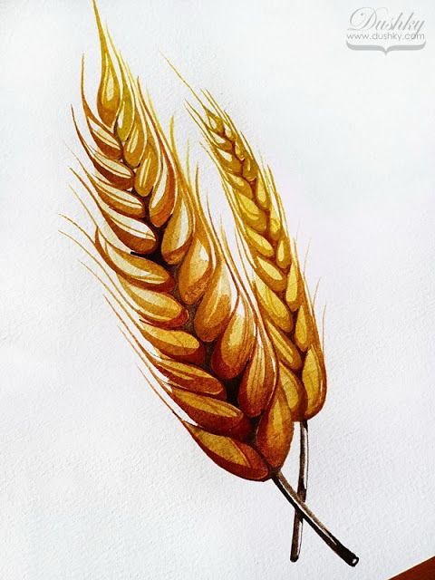 the coffea by #dushky   #watercolor #illustration #plant #plantproject #tattoodesign #wheat #grain