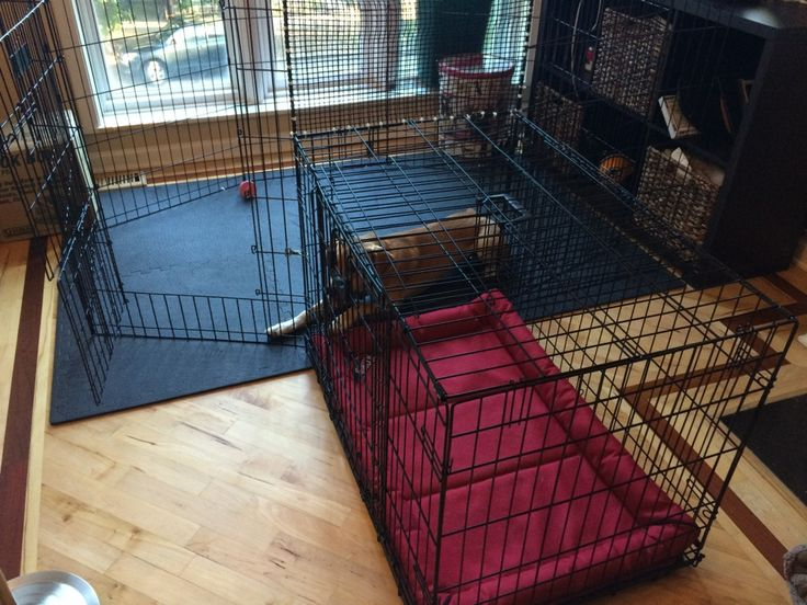 Pet Indoor Play Area After a few trial and errors, I