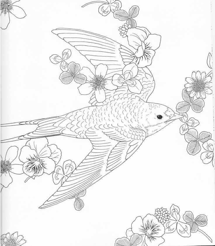 Harmony Of Nature Adult Coloring Book Pg 46 Color Pages