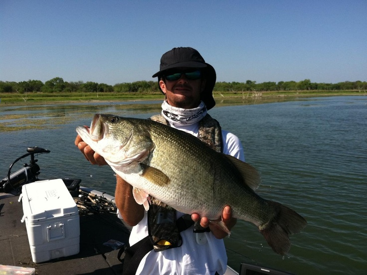47 best images about fishing on pinterest the fly blue for Best bass fishing lakes in texas